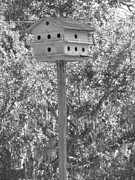 Florida House Photo Originals - Bird Hotel by Emeraldcoast Gallery
