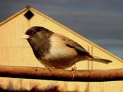 Wingsdomain Art and Photography - Bird House . 40D11078