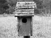 Florida House Photo Originals - Bird House by Emeraldcoast Gallery