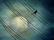 In A Row Art - Bird In Moonlight by Digital Art - Surrealism