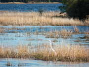 Nj Photo Originals - Bird in Pinelands by Bob Palmisano
