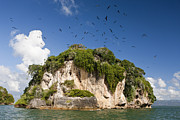Featured Art - Bird Island La Cacata Los Haitises by Reinhard Dirscherl