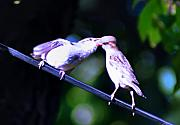 Bird Photographs Photos - Bird Kiss by Bill Cannon