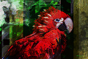 Talking Mixed Media Metal Prints - Bird of Exotic Color Metal Print by Christine Mayfield