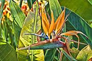 Bird Of Paradise Flower Digital Art - Bird of Paradise 2 by Edward Sobuta