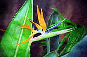 Full Bloom Mixed Media Acrylic Prints - Bird of Paradise Acrylic Print by Andee Photography