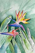 Kauai Artist Paintings - Bird Of Paradise by Brenda Owen