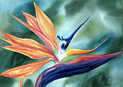 Bird Of Paradise Paintings - Bird of Paradise by Deborah Ronglien