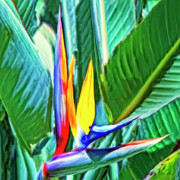 Haleiwa Paintings - Bird of Paradise by Dominic Piperata