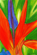 Bird Of Paradise Drawings - Bird of Paradise by Dorneisha Batson