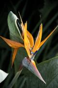 Hand Crafted Art - Bird of Paradise Flower by Don  Wright