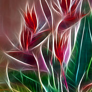 Morphed Metal Prints - Bird of Paradise Fractal Panel 2 Metal Print by Peter Piatt