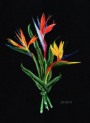 Color Pencil Paintings - Bird of Paradise in Black by Peter Piatt
