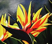 Kim Selig Art - Bird of Paradise by Kim Selig