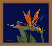 Marlena  Burger - Bird of Paradise