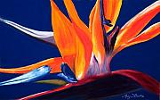 Bird Of Paradise Flower Pastels - Bird of Paradise by Mary Benke