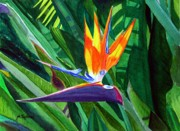 Bird Of Paradise Flower Painting Framed Prints - Bird-of-Paradise Framed Print by Mike Robles