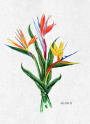 Color Pencil Paintings - Bird of Paradise by Peter Piatt