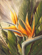 Bird Of Paradise Flower Pastels - Bird of Paradise by Shera Summer