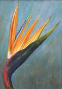 Xenia Sease - Bird of Paradise