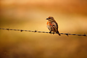 Brian Brown - Bird on a Wire