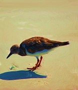 Photo Manipulation Posters - Bird on Daytona Beach Poster by David Lane