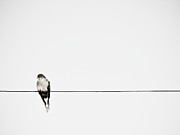 Sitting Photos - Bird On Power Line by Photograph by Ryan Brady-Toomey