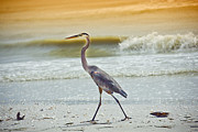 Bird At Sea Photos - Bird on the Shore by Joel P Black