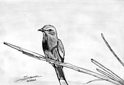 Bird Print by Shashi Kumar