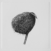 Printmaking Prints - Bird Print by Valdas Misevicius