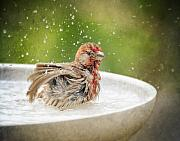 House Finch Photos - Birdbath Frolic by Al  Mueller