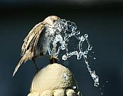 Piller Prints - Birdbath Print by Jan Piller