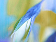 Fine Art Flower Photography Posters - Birdflower Abstract Poster by Irina Wardas