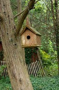 Squirrel Prints Photo Prints - Birdhouse 208 Print by Joyce StJames