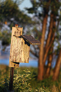 Swallow Photos - Birdhouse 23 by Andrew Pacheco