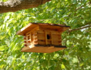 Squirrel Prints Photo Prints - Birdhouse 5 Print by Joyce StJames