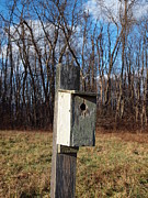 Log Cabins Photographs Photos - Birdhouse On A Pole by Robert Margetts