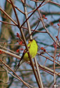 Pretty Colored Bird Photos - Birds Are Back by Debra     Vatalaro