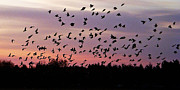 Nature Photo Photos - Birds at Sunrise by Aimee L Maher