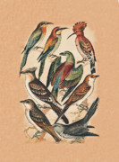 Eftalou Art - Birds by Eric Kempson