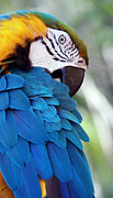 Parrot Metal Prints - Birds Eye View Metal Print by Glennis Siverson