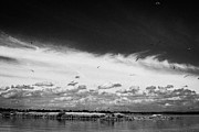 Neagh Prints - Birds Flying Above Small Roes Island One Of The Many Flat Shallow Areas Of Lough Neagh  Print by Joe Fox