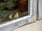 Knick Knacks Posters - Birds In A Window Poster by Lori Beesley