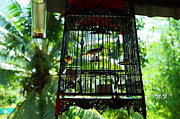 Nataly Fomina - Birds in cage