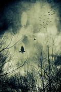 Autumn Woods Posters - Birds in flight against a dark sky Poster by Sandra Cunningham
