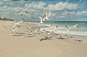 Melbourne Beach Prints - Birds In Flight Print by Cheryl Davis