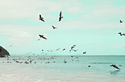 Caribbean Sea Photo Prints - Birds In Flight Print by Kim Fearheiley Photography