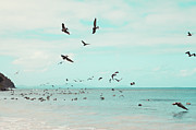 Feeding Birds Prints - Birds in Flight Print by Kim Fearheiley