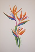 Most Sold Drawings Prints - Birds of paradise I Print by Tatjana Popovska