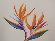 Most Sold Drawings Prints - Birds of paradise II Print by Tatjana Popovska